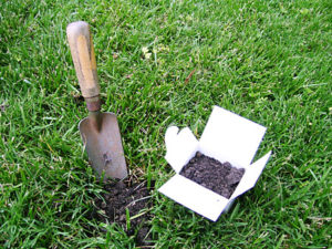 trowel and soil sample container