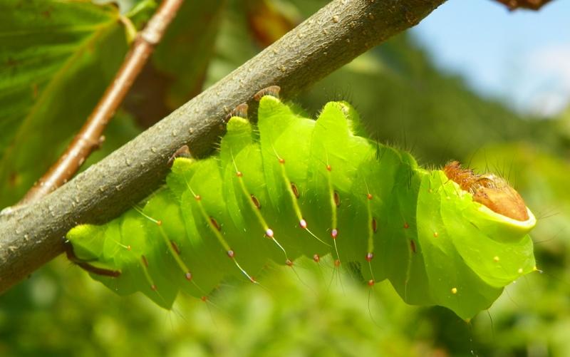 Pleasant What Should I Do About Caterpillars North Carolina Inzonedesignstudio Interior Chair Design Inzonedesignstudiocom