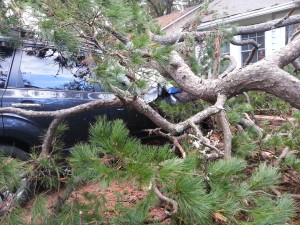 Cover photo for Taking Care of Storm Damaged Trees