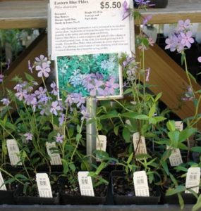 Chatham County Nurseries Specializing In Native Plants