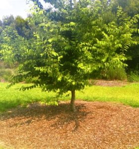 Fall Is The Best Time To Plant Trees And Shrubs North Carolina
