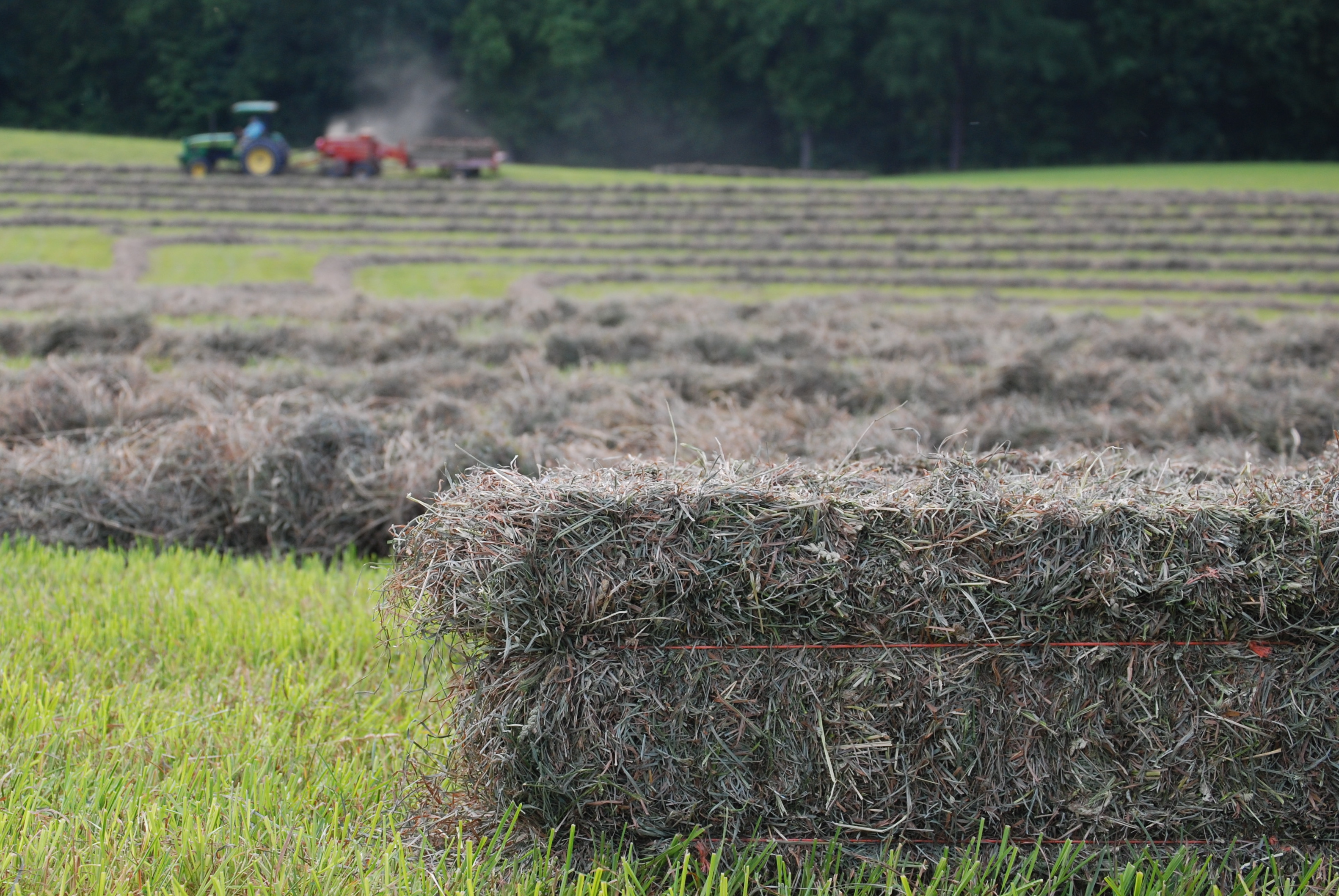 Image of hay bales