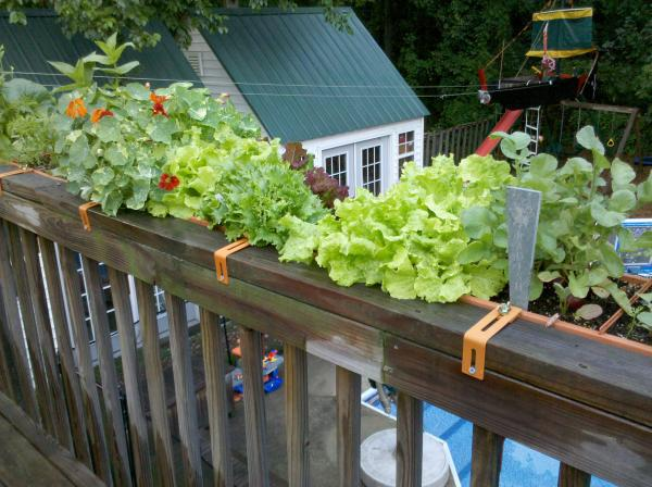 Fall Vegetable Gardening in Containers | North Carolina Cooperative ...