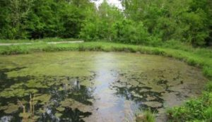Cover photo for Aquatic Weed Management Workshop Resources
