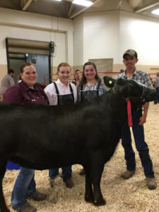 youth with steer