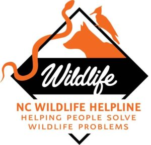 wildlife helpline