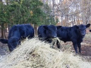 Cover photo for Piedmont Regional Beef Conference