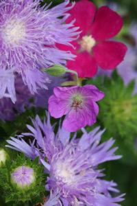 Cover photo for 2019 Extension Gardener Workshop Series