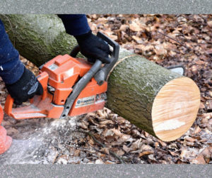 Cover photo for Tree Cleanup and Chainsaw Safety for Disaster Relief Workshop