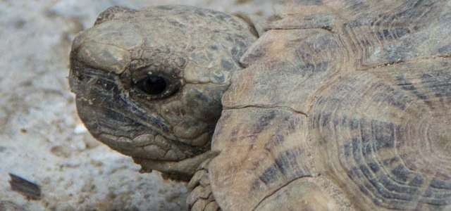 Image of a tortise
