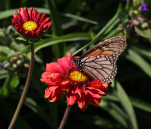 Cover photo for Early April Blooms in Pollinator Paradise