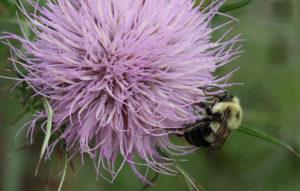 Cover photo for Virtual Pollinator Field Day June 22
