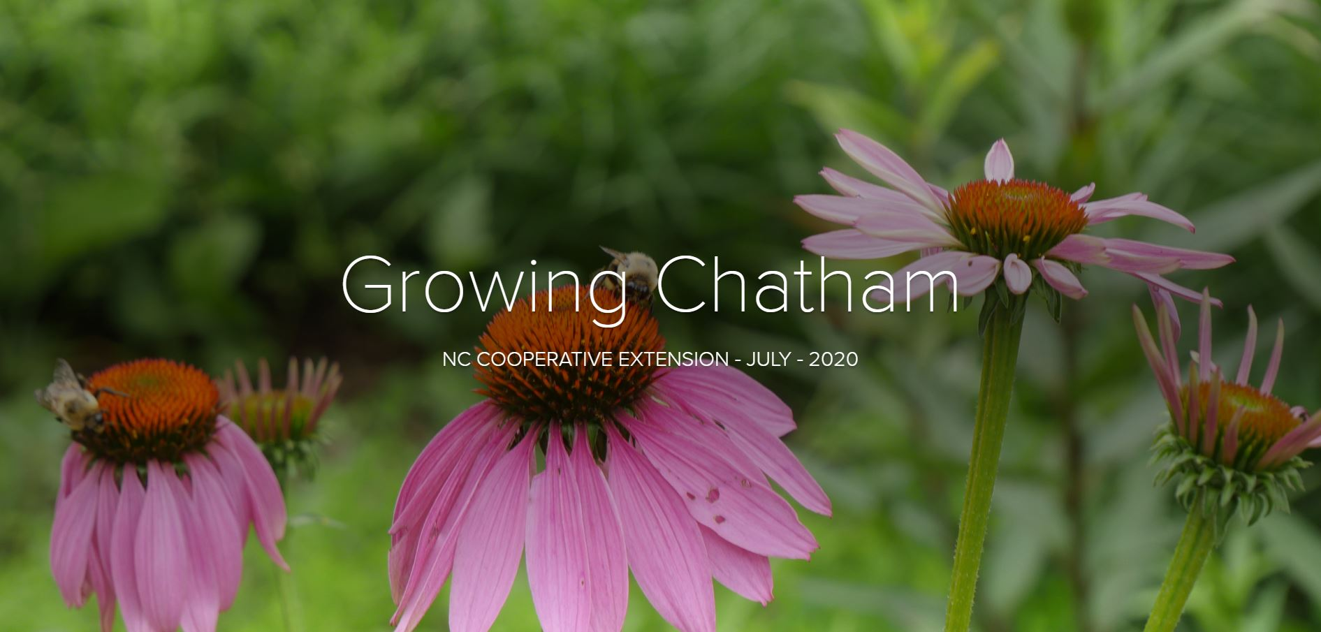 Growing Chatham