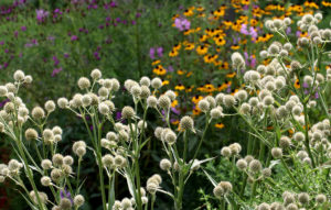 Cover photo for August Blooms in Pollinator Paradise