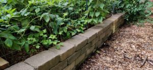Block wall/raised bed with strawberries